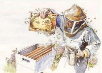 207x148-images-stories-vijesti-beekeeper-at-hive_1414562591